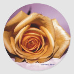 Single yellow rose contrasted against lilac back classic round sticker
