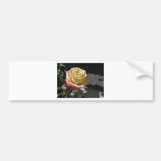 Single yellow rose flower in spring bumper sticker