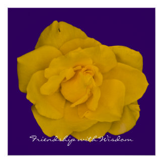 Single Yellow Rose Posters