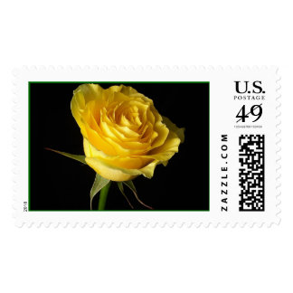 Single Yellow Rose Stamps