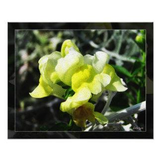 Single Yellow Snap Dragon Photo Print