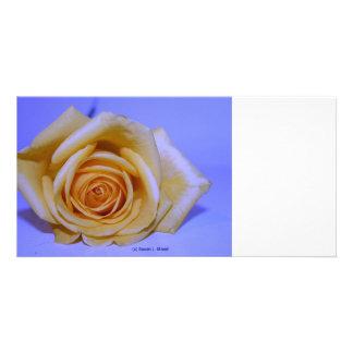 Single yellowish rose blue tinted photo card