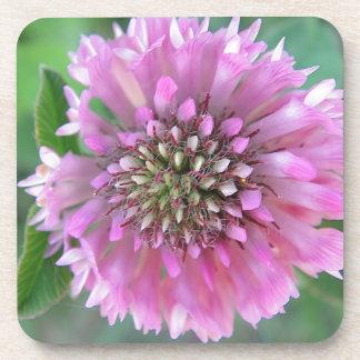 Singular pink bloom coaster