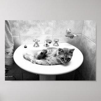 sink_cats_12 pets kitten animals adorable cuteness poster
