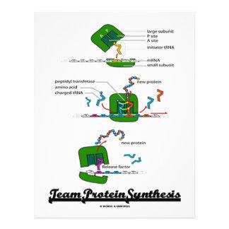 Síntesis de la proteína del equipo (biología) tarjetas informativas