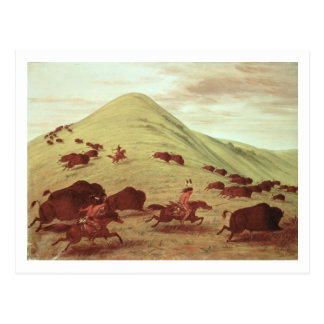 Sioux Indians hunting buffalo, 1835 (oil on canvas Postcard
