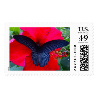 Sip Sweetly - Butterfly Stamps