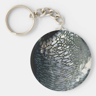 Siphon of a giant clam key chain