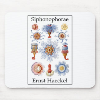 Siphonophorae by Ernst Haeckel Mouse Mats