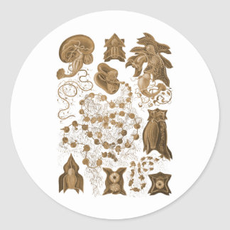 Siphonophorae Classic Round Sticker