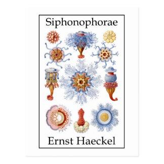 Siphonophorae de Ernst Haeckel Postal