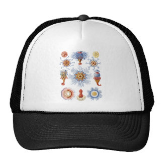 Siphonophorae Mesh Hats