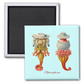 Siphonophorae  - Jellyfish square magnet