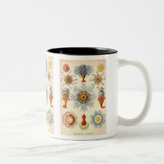 """Siphonophorae"" Vintage Illustration Mug"