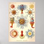 """Siphonophorae"" Vintage Illustration Posters"