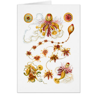 Siphonophores Tarjeta De Felicitación