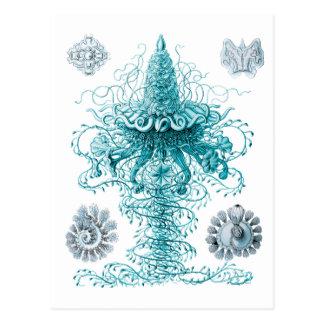 Siphonophores Tarjetas Postales