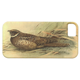 Siphonorhis Americana iPhone 5 Barely There Case