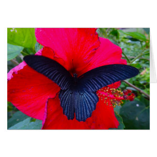 Sipping Sweetly - Butterfly Greeting Card