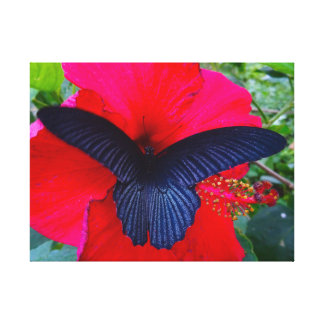 Sipping Sweetly - Butterfly Greeting Card Canvas Print
