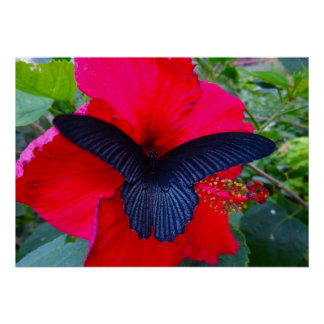 Sipping Sweetly - Butterfly Greeting Card Poster
