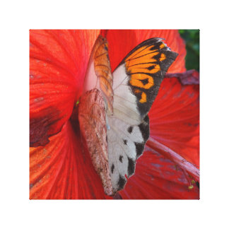 Sipping Sweetly Canvas Print