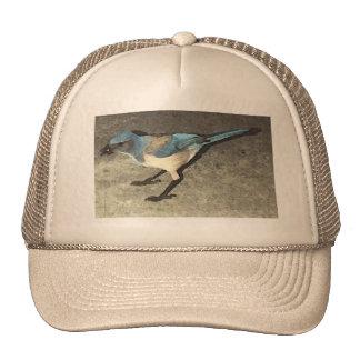 Sir Reginald The Scrub Jay Trucker Hats