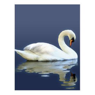 Sir Swan Postcard