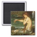 Sirena por el Waterhouse de JW, arte de la Imán De Nevera
