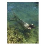 Sirena que nada bajo el agua postal