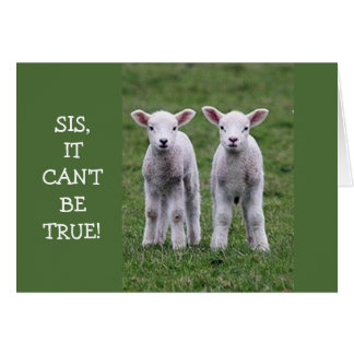 SIS LAMBS ARE CONFUSED ON YOUR BIRTHDAY-NEVER AGE CARD