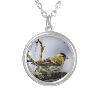 siskin eurasiático amarillo en una rama desnuda en colgante redondo