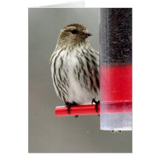 Siskin on the birdfeeder card