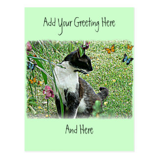 """Sissy"" Black & White Cat Postcard"
