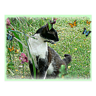 """Sissy"" Black & White Cat Postcard"