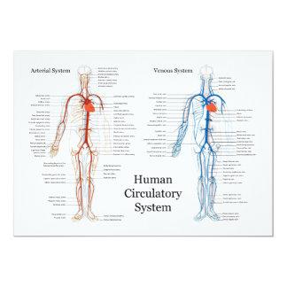 """Sistema circulatorio humano de arterias y de venas invitación 5"""" x 7"""""""