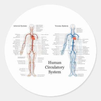 Sistema circulatorio humano de arterias y de venas etiquetas redondas