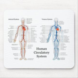 Sistema circulatorio humano de arterias y de venas alfombrillas de raton