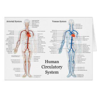 Sistema circulatorio humano de arterias y de venas felicitación
