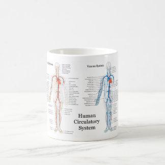 Sistema circulatorio humano de arterias y de venas taza