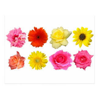 sistema de la flor postales