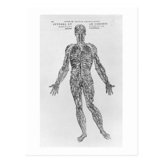 Sistema de las venas y de las arterias (impresión tarjetas postales