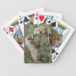 Sistema de naipe de los guepardos baraja cartas de poker