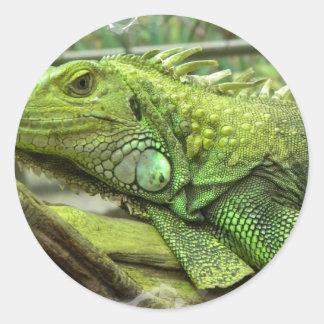 Sistema de reclinación del lagarto de pegatinas pegatina redonda