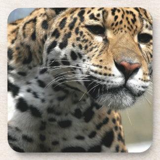 Sistema del gato de leopardo de seis prácticos de  posavasos de bebida