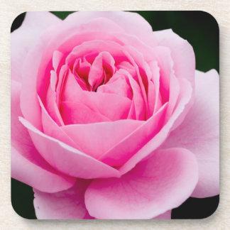 Sistema del rosa del rosa en colores pastel de prá posavasos de bebidas