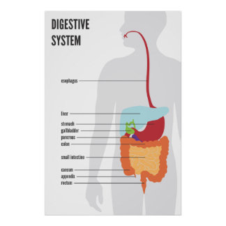 Sistema digestivo posters