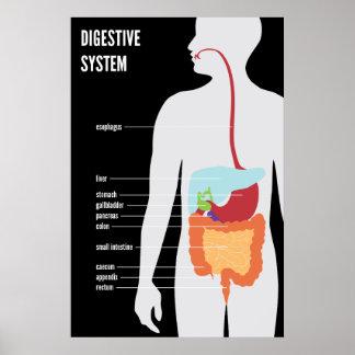 Sistema digestivo impresiones