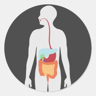 Sistema digestivo pegatina redonda