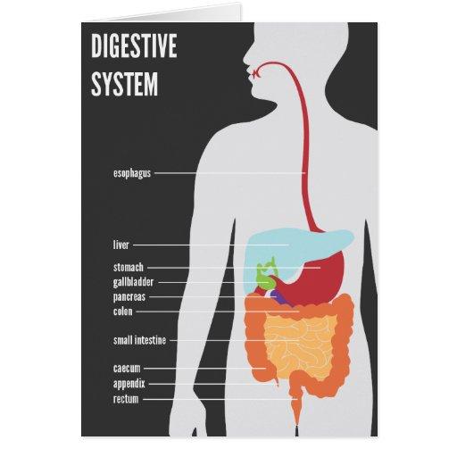 Sistema digestivo tarjeton